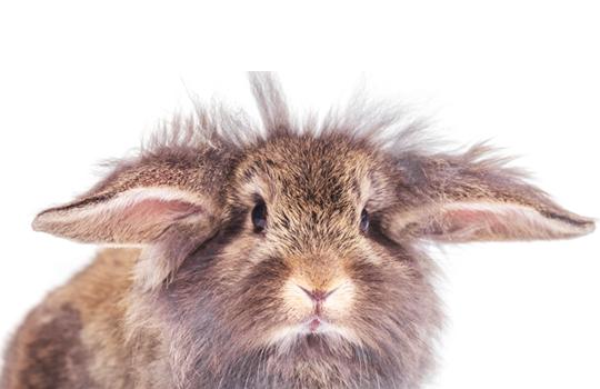 Photo of bunny