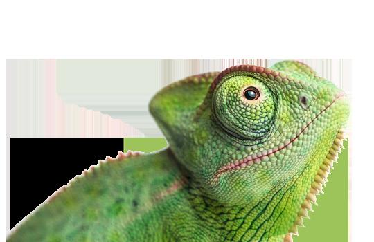 Photo of lizard